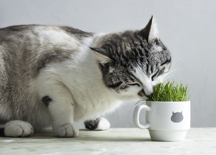 Some Plants Can Make Your Cat Sick