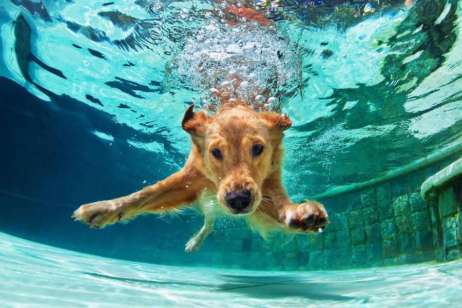 Common Hot Weather Hazards for Pets