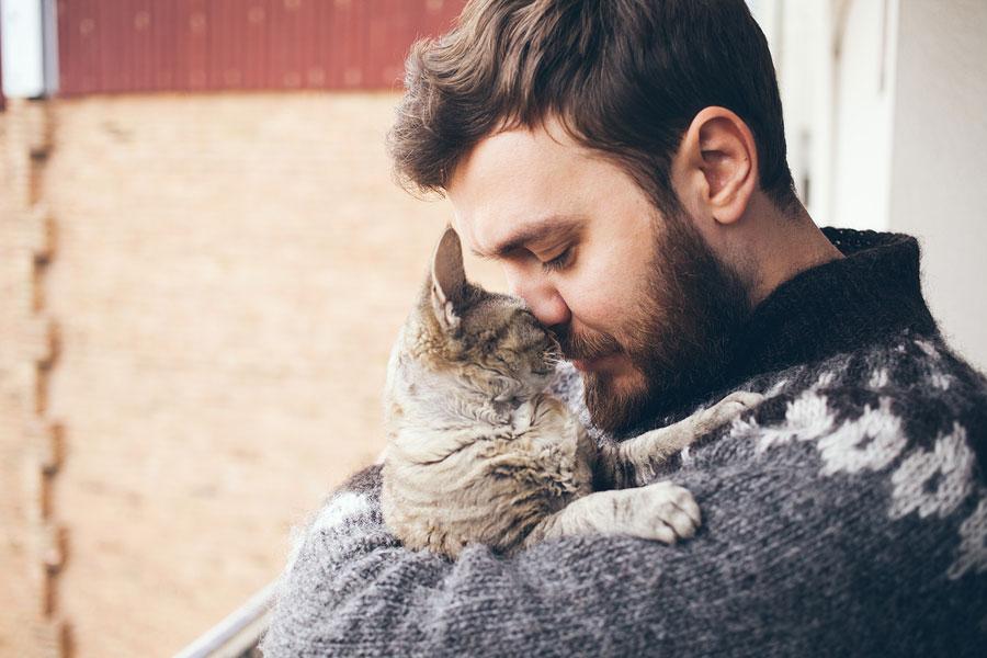 Reasons Why Cats Purr