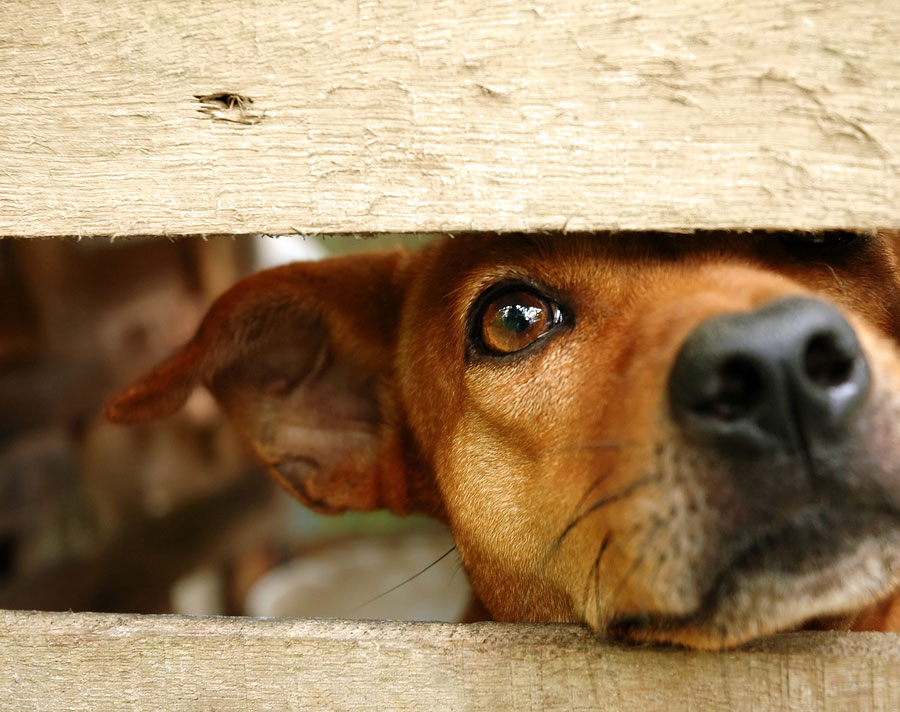 Key Facts about Separation Anxiety in Dogs and Cats