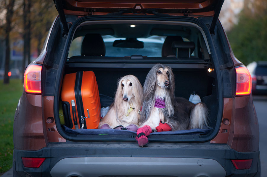 How to Travel with Pets this Holiday Season