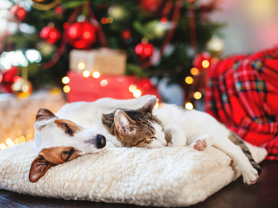 Avoid These Holiday Hazards to Keep Your Pet Safe This Season