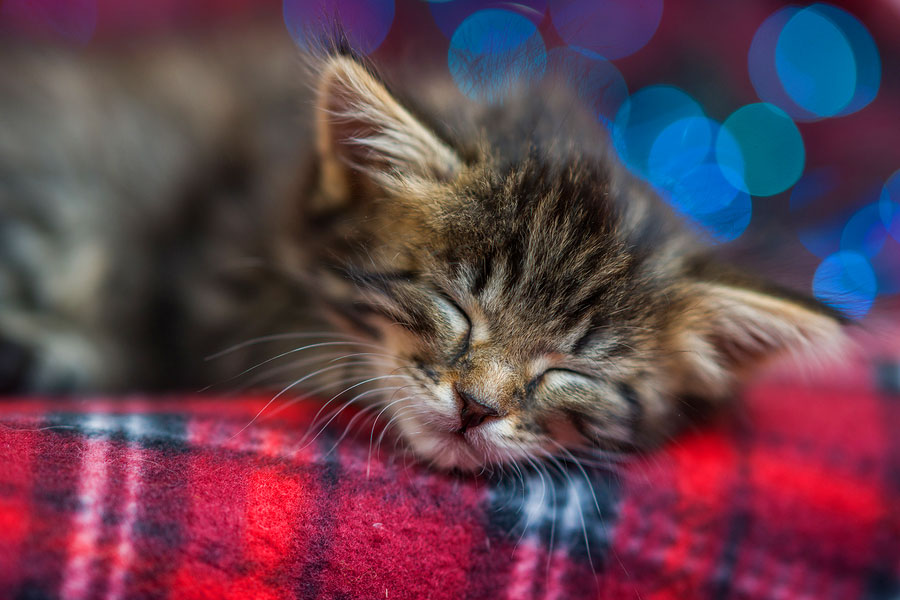 Prepare to Care for Your New Kitten with This Checklist