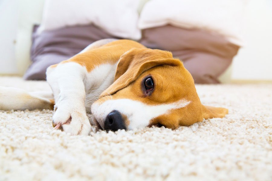 Pet Infections and Treatments: What Kinds are There?