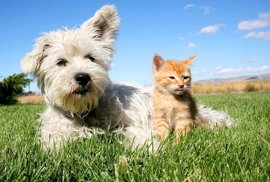 What Are the Symptoms of Cushing's Syndrome in Your Pet?