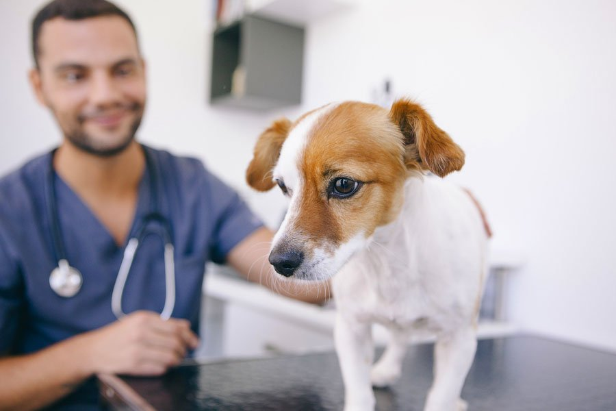 How to Reduce Your Pet's Anxiety During a Veterinary Visit