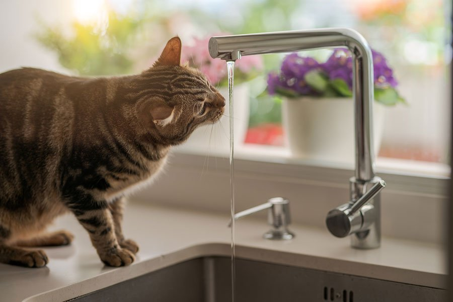 Pet Dehydration - How to Help Your Pet Drink More Water
