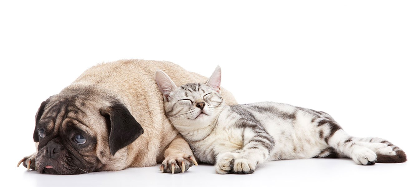 Why Do Dogs and Cats get Arthritis?