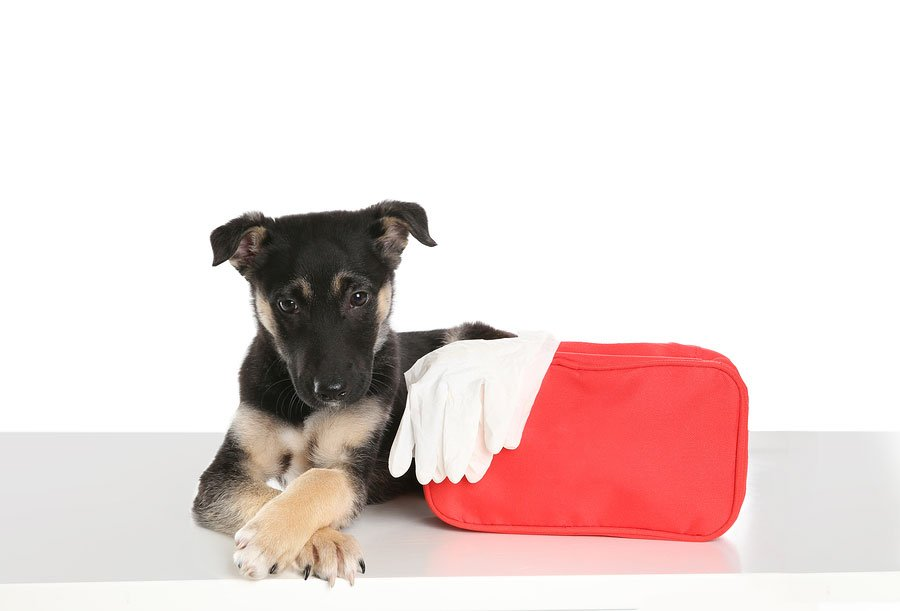 Prepare a Pet Emergency Supply Kit for this Hurricane Season