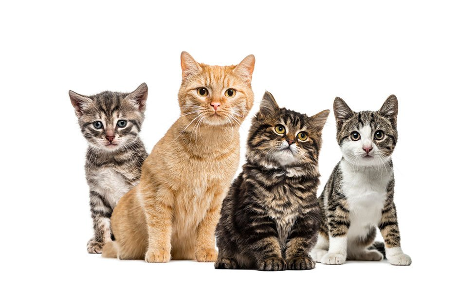 What Are the Key Facts About Cat Leukemia?