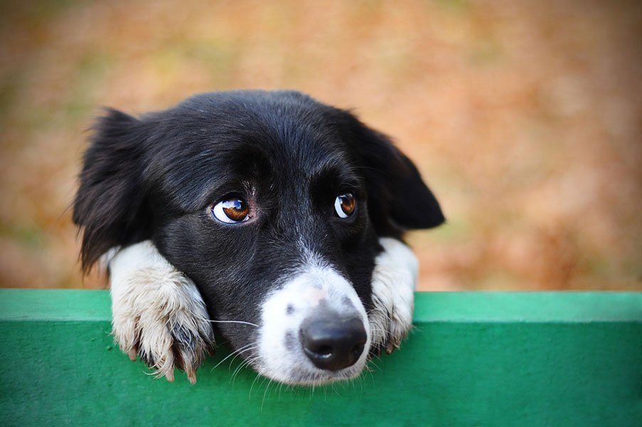 How Do I Tell if my Dog is Depressed?
