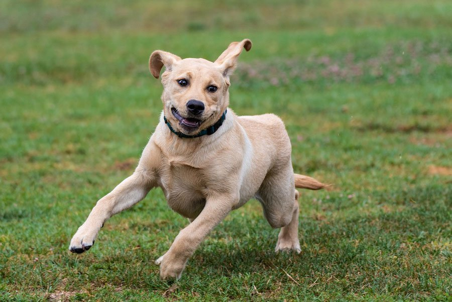 5 Ways to Calm an Overly Excited Dog