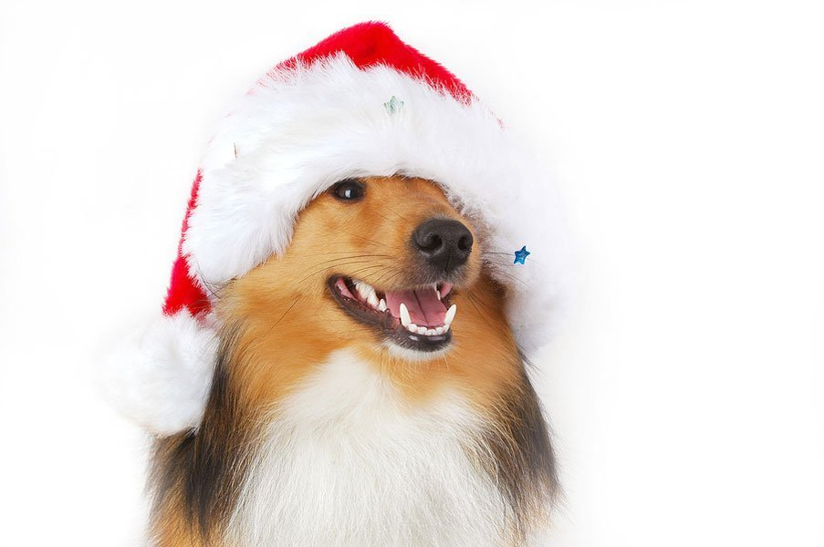 Children and Dogs: Should You Get a Dog for Christmas?