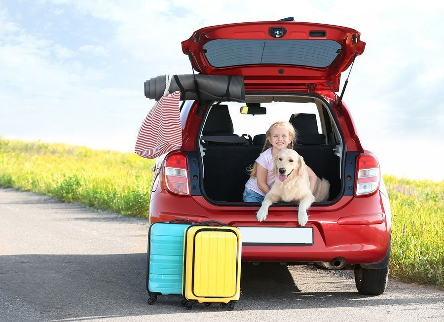 Create a Safe Environment When Traveling by Car with Your Dog