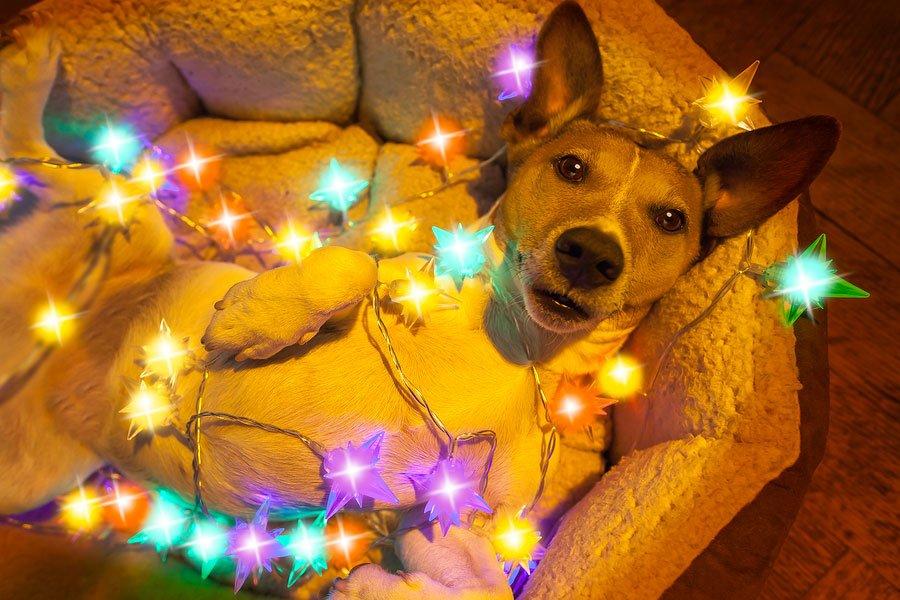 Safe Dog Treats for Your Dog's Christmas Stocking