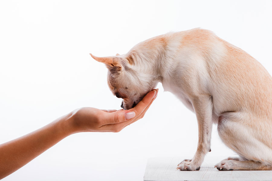 giving your pets medicine