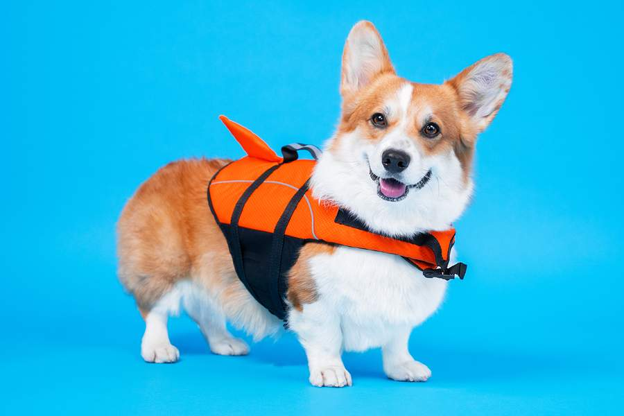 CVETS Summertime Safety for Pets